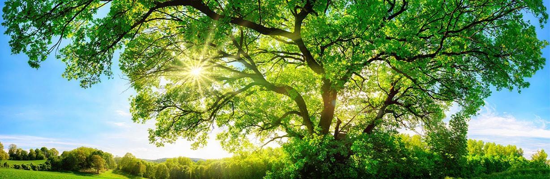 Eichenbaum – COMNATA Esstisch